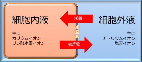 2-1.細胞膜の浸透圧の仕組み